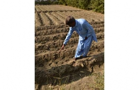 14-A-farmer-shows-his-field-of-bio-fortified-wheat